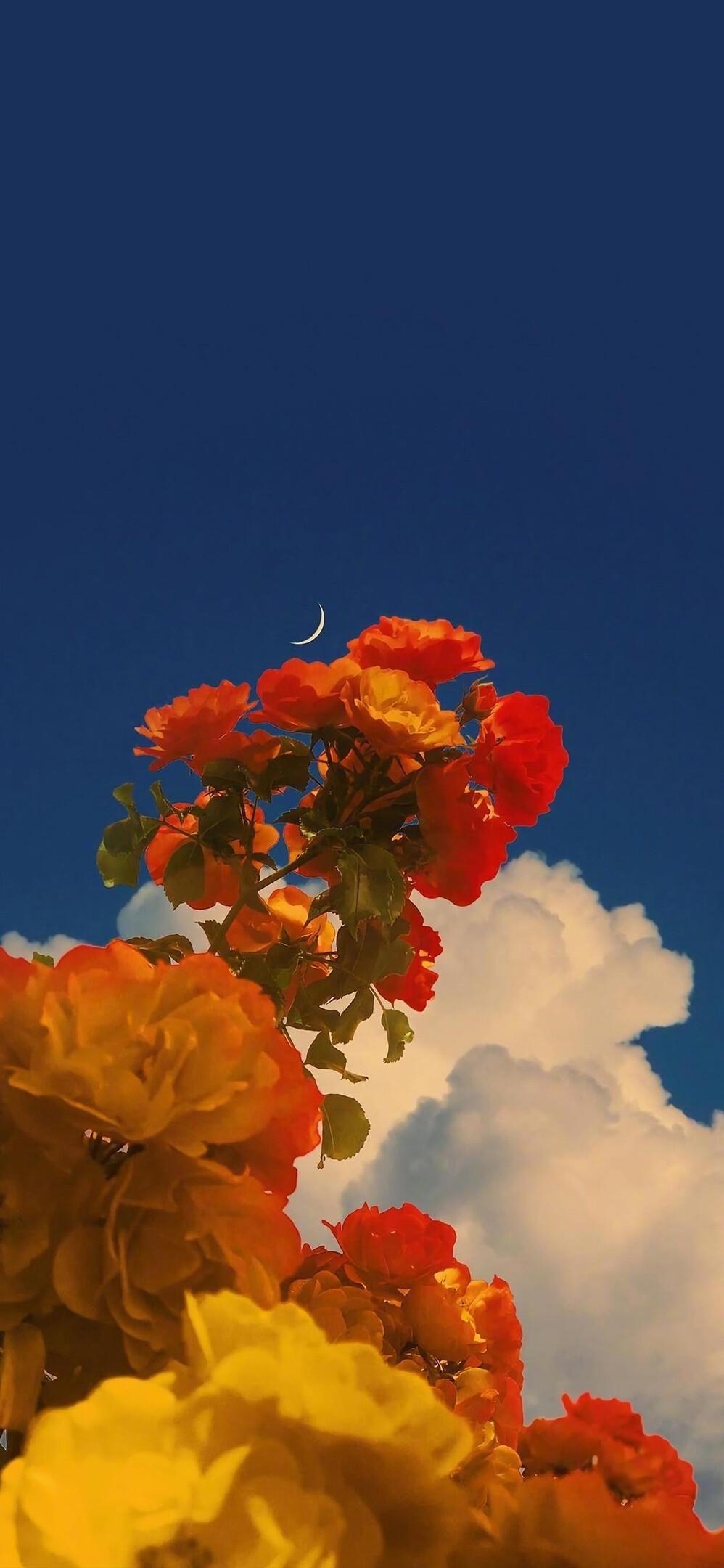 风会记得一朵花的香